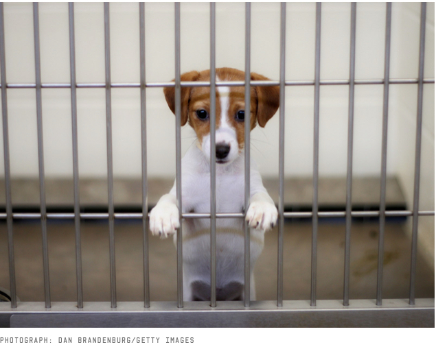 Dog in Jail