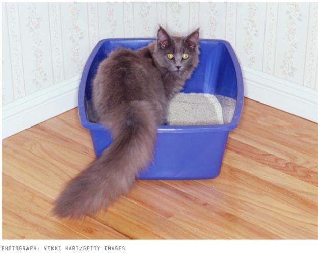 KittyinToilet