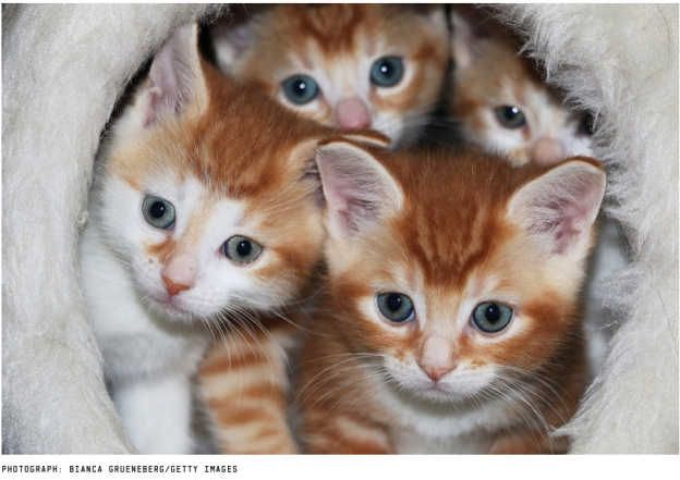 Multiple Kitties